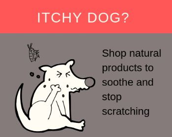 Other Natural Remedies for Just Plain Itchy Dogs